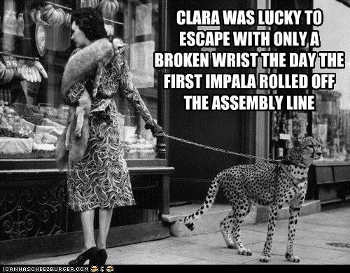 Cheetahs LOVE Impalas
