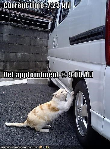 Current time: 7:23 AM   Vet apptointment @ 9:00 AM
