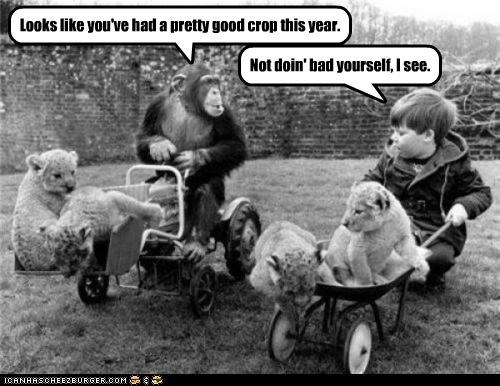 animals,Babies,chimpanzees,crops,historic lols,kids,lions,silly