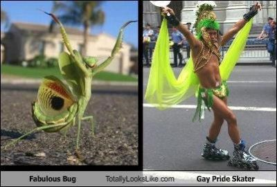 bug,classics,fabulous,gay pride,green,insects,praying mantis,pride,skater