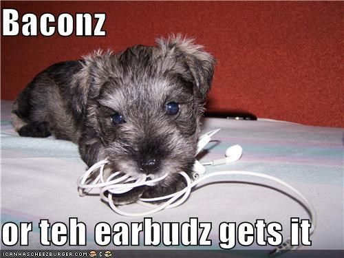 Baconz  or teh earbudz gets it
