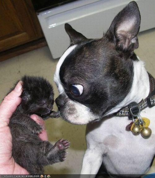 basement cat,confused,dogs,evil,goggies,goggies r owr friends,Interspecies Love,newborn,tiny,wtf