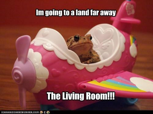 airplane,animals,frogs,I Can Has Cheezburger,living room,toys,Travel,wtf