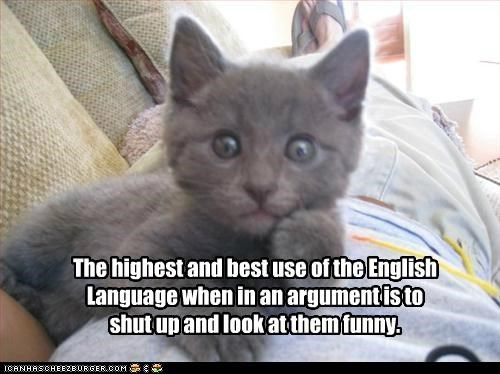argument,best,caption,captioned,cat,english,funny,highest,kitten,language,look,shut up,Staring,use