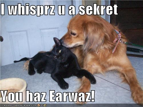 I whisprz u a sekret  You haz Earwaz!