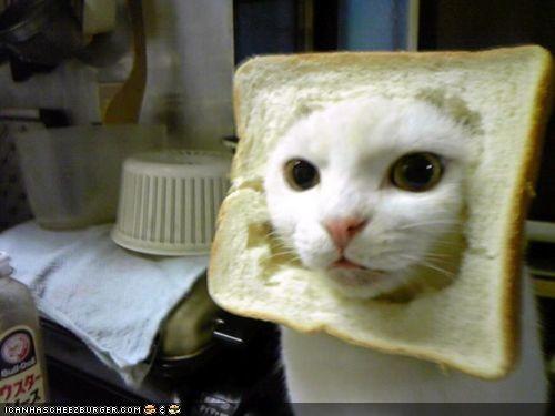 bread,cyoot kitteh of teh day,food,hat,sandwich,wtf