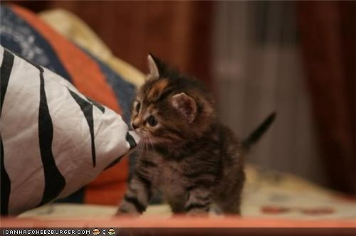 bed,biting,cyoot kitteh of teh day,helping,sheets,tiny