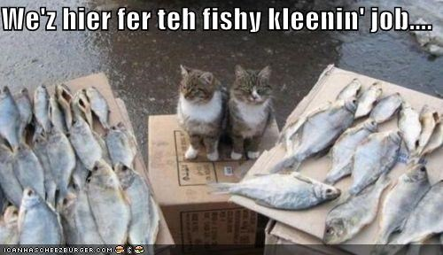 We'z hier fer teh fishy kleenin' job....