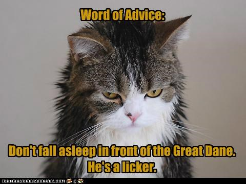 advice,asleep,caption,captioned,cat,do not want,dont,fall,front,great dane,lick,licker,licking,regret,word
