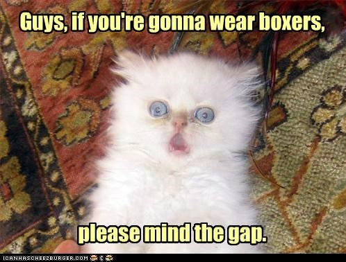 advice,boxers,caption,captioned,cat,do not want,gap,guys,kitten,mind,please,unsee,wearing