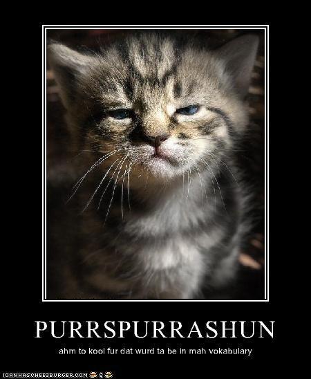 PURRSPURRASHUN