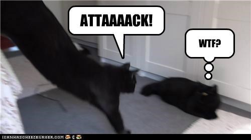 Basement Cat Prefers Frontal Attack