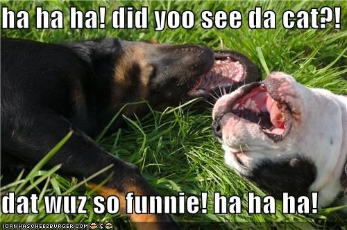 ha ha ha! did yoo see da cat?!  dat wuz so funnie! ha ha ha!