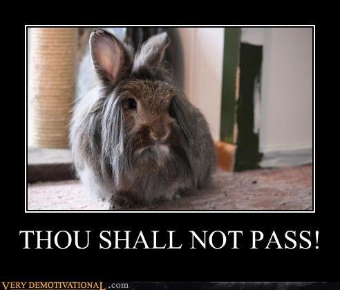 bunny,gandalf,hilarious,shall not pass