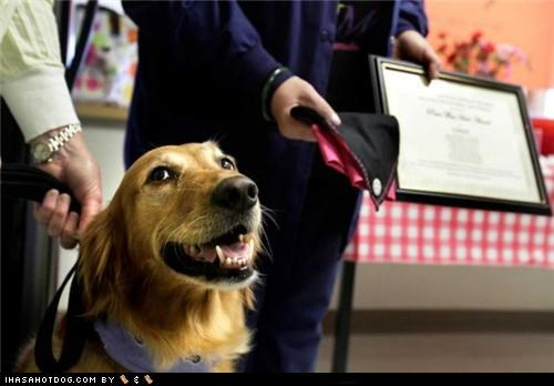Cindy, a Golden Retriever, Named Honorary Registered Nurse at San Antonio, TX Hospital