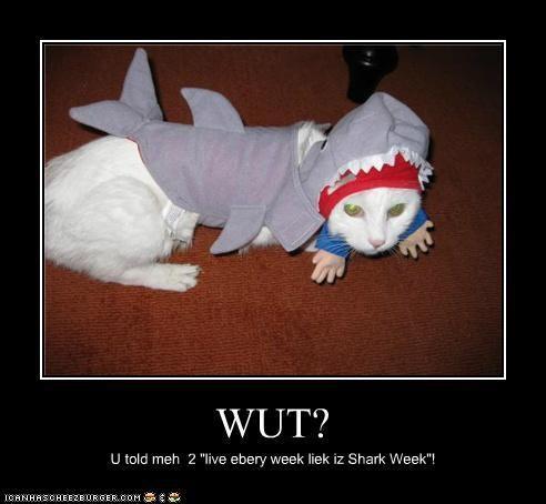 costume,package post,shark,shark week,sharks