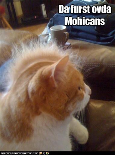 animals,Cats,I Can Has Cheezburger,mohawk,the last of the mohicans