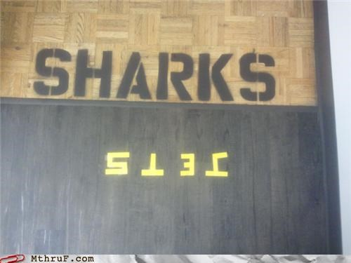 gangs,hall,jets,musicals,sharks,west side story