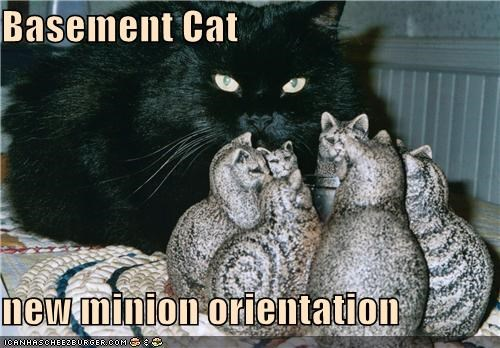 Basement Cat  new minion orientation