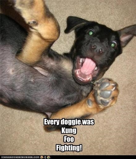Every doggie was Kung Foo Fighting!