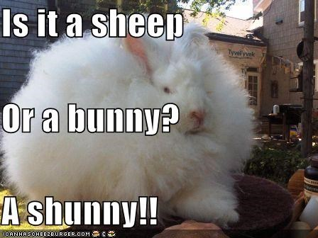 Is it a sheep  Or a bunny? A shunny!!