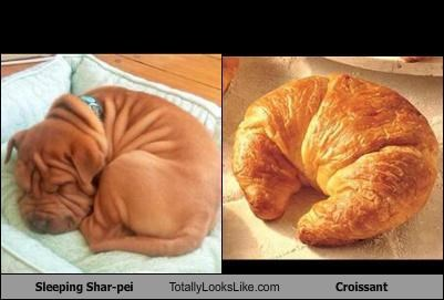 croissant,dogs,food,Hall of Fame,sharpei,shar pei,sleeping