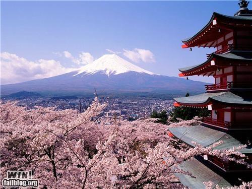 castle,cherry blossom,fuji,Japan,mt-fuji,photography