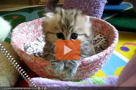 VIDEO: The Cyootest Kitten EVAR?!?!?!