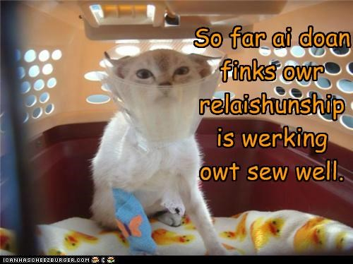 caption,captioned,carrier,cast,cat,cone of shame,do not want,dont,far,relationship,so,think,upset,well,working