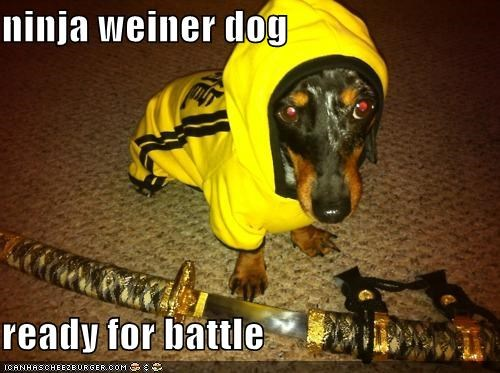ninja weiner dog  ready for battle
