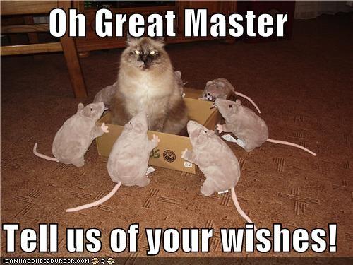 caption,captioned,cat,great,master,rat,rats,stuffed animal,stuffed animals,tell,wishes,worshipping