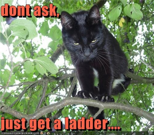dont ask,  just get a ladder....