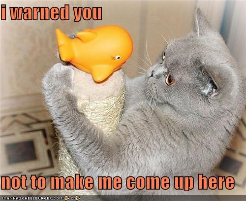 caption,captioned,cat,climbing,come,here,I,make,me,not,post,scratching post,toy,up,warned,you