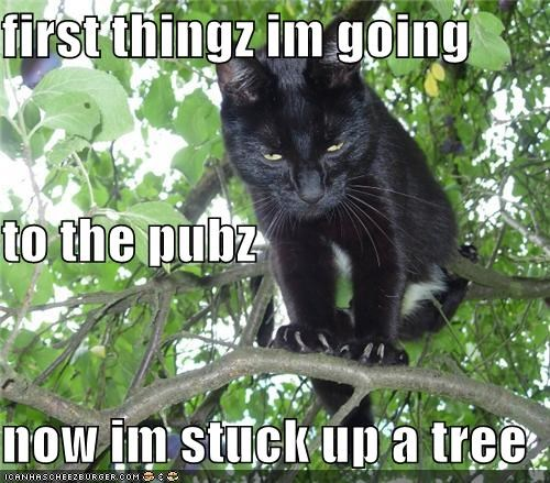 first thingz im going to the pubz now im stuck up a tree