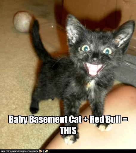Baby Basement Cat + Red Bull = THIS
