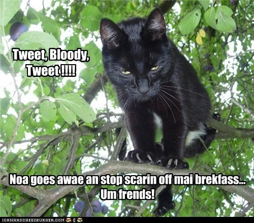 Tweet, Bloody, Tweet !!!!