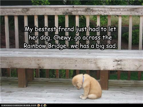 My bestest frend just had to let her dog, Chewy, go across the Rainbow Bridge...we has a big sad.