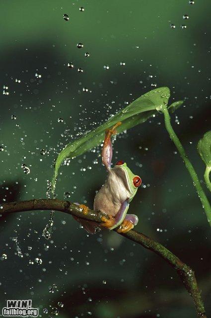 frog,mother nature ftw,rain,storm,umbrella