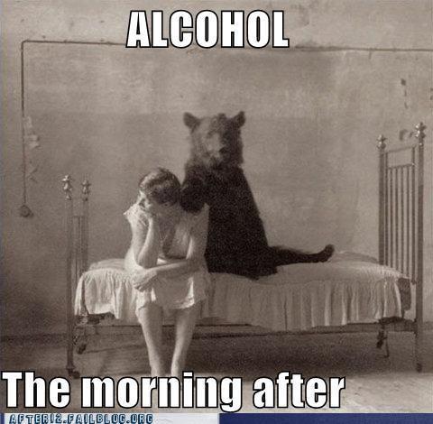 alcohol,bad decision,bear,bed,morning after,regret