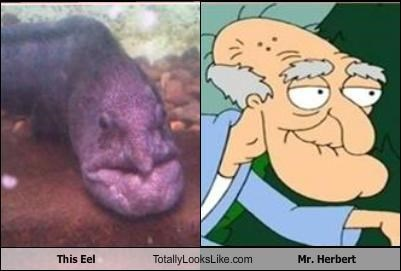 "TLL Classics: This Eel Totally Looks Like Mr. Herbert from ""Family Guy"""