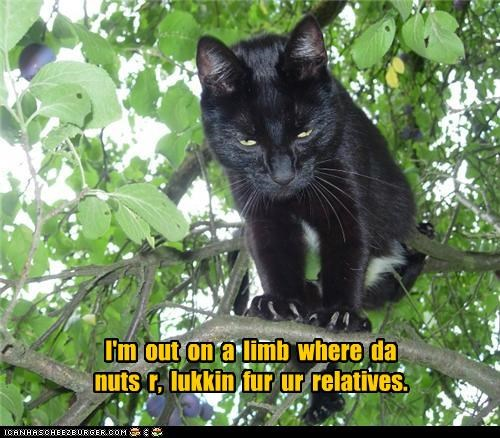 I'm  out  on  a  limb  where  da  nuts  r,  lukkin  fur  ur  relatives.