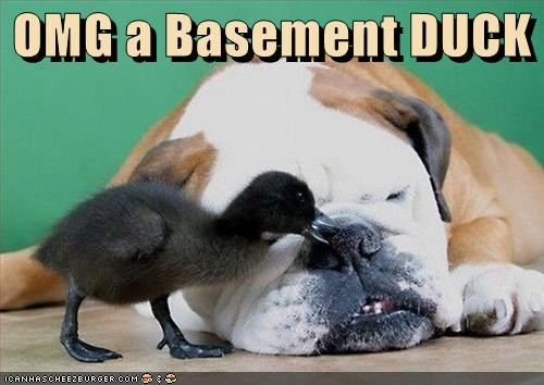 OMG a Basement DUCK