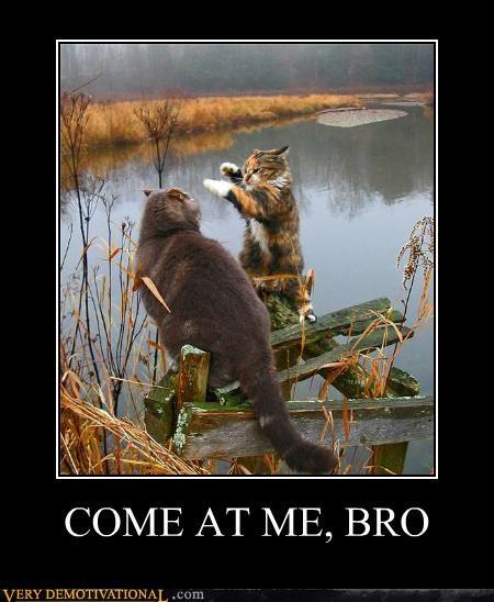 animals,bro,Cats,fight,hilarious