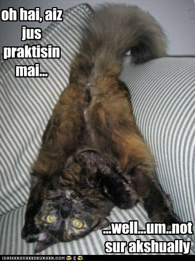caption,captioned,cat,confused,just,lolwut,not sure,ohai,practicing,upside down
