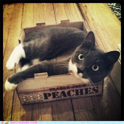 bed,box,cat,feline,preference,reader squees,rule,toys,trees