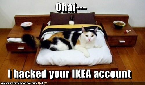account,bed,best of the week,caption,captioned,cat,hacked,Hall of Fame,ikea,ohai