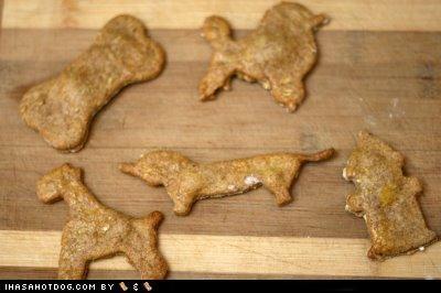 Homemade Goggie Treat ob teh Week: Chicken & Oat Cookies!