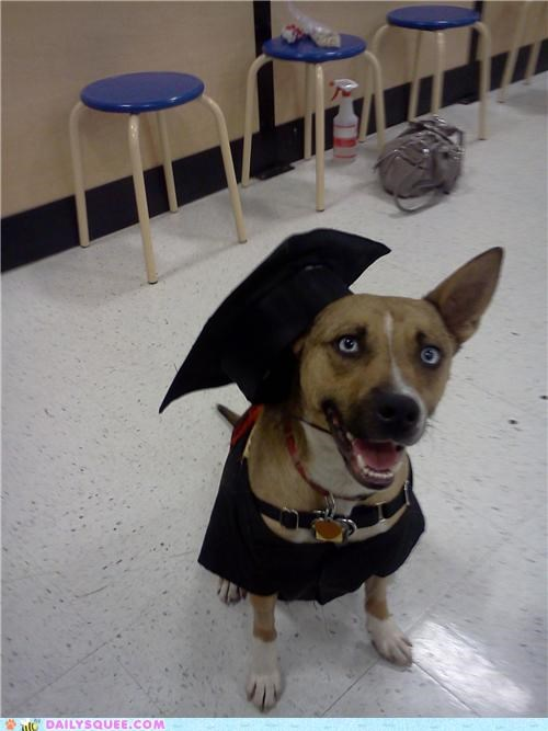 class,dogs,graduate,graduation,obedience,pass,pit bull,puppy,reader squees,school