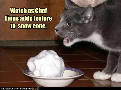 adds,caption,captioned,cat,chef,cone,snow,snow cone,texture,watch