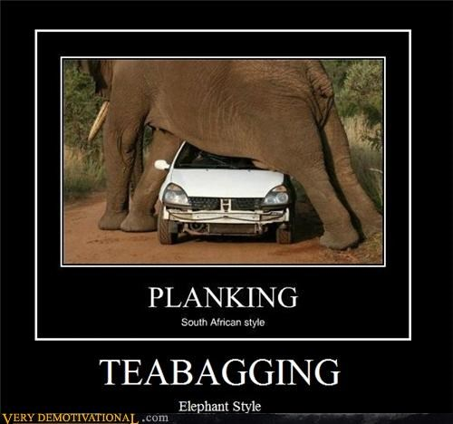 car,elephant,hilarious,teabagging,wtf
